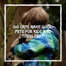 Do Cats Make Good Pets For Kids and Toddlers?