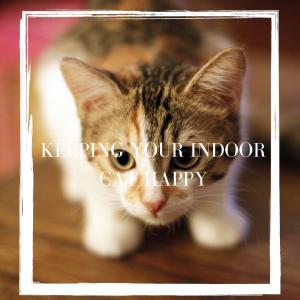 Indoor cat happy