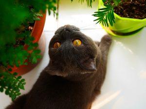 indoor cats eat greenery