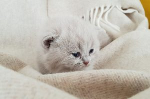 caring for a kitten