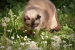 outdoor cat in garden