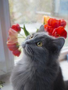 indoor cats activities