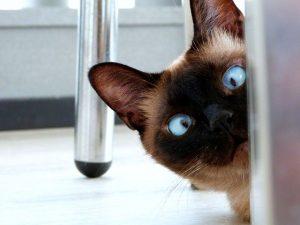 scared cat behavior