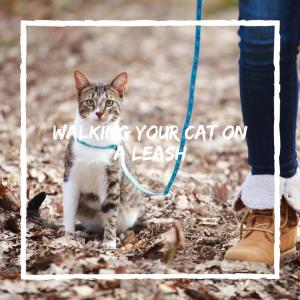 train cat on leash