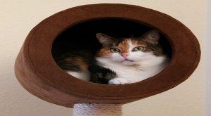 cat enrichment