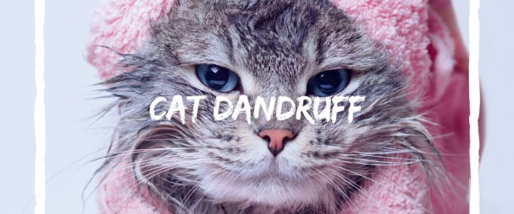 cat dandruff treatment