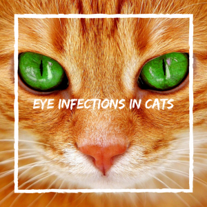 cat eye health