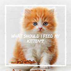 What Should I Feed My Kitten?