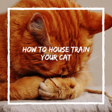 How To House Train Your Cat