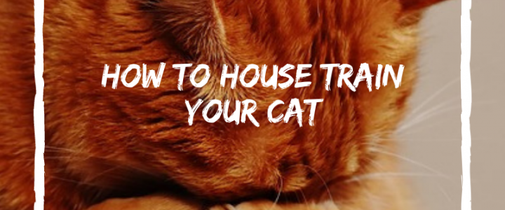 best litter boxes