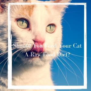 Cat raw diet