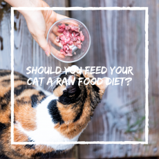 Should You Feed Your Cat A Raw Food Diet?