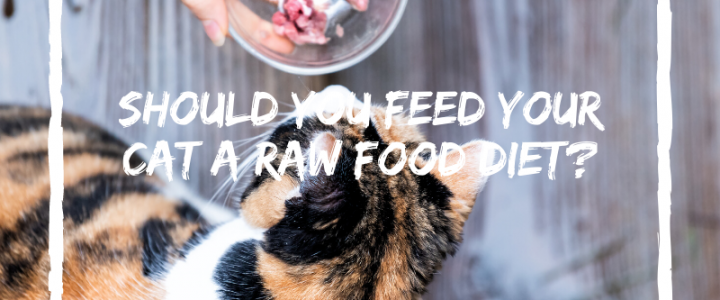 raw food cat diet