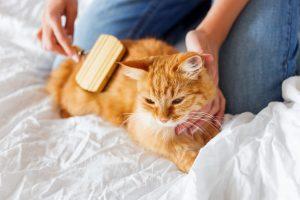 cat grooming brushes