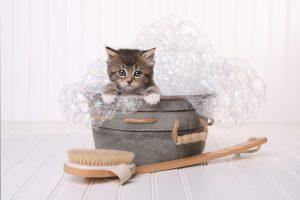 cat grooming kitten